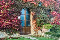 A Colourful Autumn Ivy Almost Completely Covers A Private Tuscany House; Tuscany, Italy — Stock Photo