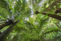 Vue à faible angle des plantes exotiques contre le ciel bleu — Photo de stock