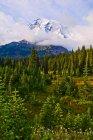 Monte Rainier e árvores em primeiro plano, Mount Rainier National Park; Washington, Estados Unidos da América — Fotografia de Stock