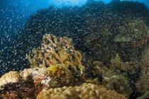 École de poissons nageant sous l'eau de la mer au-dessus du fond marin avec la lumière du soleil d'en haut — Photo de stock