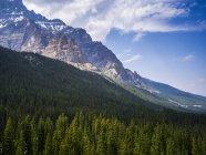 Forêt luxuriante sur pente sous la montagne de neige couverte de pics — Photo de stock
