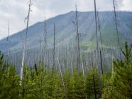 Дерева, зростаючий з трав і рослин з гори на фоні денний час — стокове фото