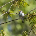 Bird sitting on branch of tree with green blurred background — Stock Photo