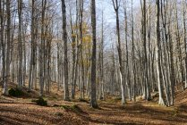 View of forest with trees growing over ground during daytime — Stock Photo
