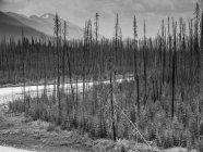 Immagine in bianco e nero degli alberi sulla riva del piccolo fiume ruscello e pendii delle montagne su priorità bassa — Foto stock
