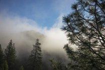 Осенний туман над реки Сакраменто вблизи Clarks Галч; Калифорния, Соединенные Штаты Америки — стоковое фото
