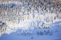 Paysage hivernal de neige et de givre couvert de forêt ; Alaska, États-Unis d'Amérique — Photo de stock