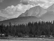 Бальк і білий малюнок дерева на березі і гори на тлі — стокове фото