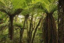 Exotische Bäume im Wald bei blauem Himmel am Tag — Stockfoto