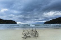 Ramitas que yacen en la orilla arenosa contra el agua y las colinas en el fondo bajo el cielo nublado - foto de stock