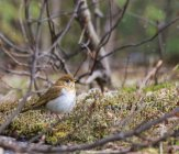 Bird sitting on twig just over ground at forest during daytime — Stock Photo