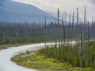 Потік переломний річку і зеленої трави з дерева на берегах — стокове фото
