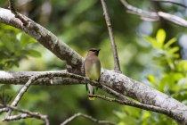 Перегляд невеликий птах, що сидить на гілці дерева денний час — стокове фото