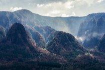 Points chauds de fumée après un incendie de forêt dans la Gorge du Columbia, Warrendale, Oregon, États-Unis d'Amérique — Photo de stock