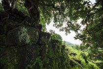 Arbre qui pousse sur les ruines dans le complexe Phou du Temple de TVA; Champasak, Laos — Photo de stock