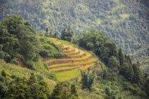 Terraços de arroz perto de Sapa; Lao Cai, Vietnã — Fotografia de Stock