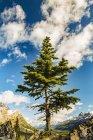 Ein einsamer Nadel-Baum wächst entlang einer felsigen Grat in den Rocky Mountains, Banff National Park; Alberta, Kanada — Stockfoto