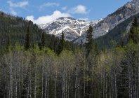 Un denso bosque en un valle en las montañas rocosas, Parque Nacional de Banff; Alberta, Canadá - foto de stock
