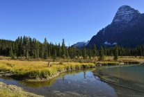 Autumn colours and a blue sky over a clear river in the Rocky Mountains along the Icefields Parkway, Columbia Icefield; Alberta, Canada — Stock Photo