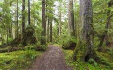 Golden Spruce Trail, Port Clement; Haida Gwaii, British Columbia, Canada — Stock Photo