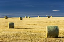 Hay bales in a cut field with blue sky; Alberta, Canada — Stock Photo
