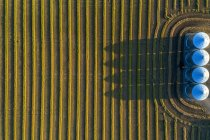 View from directly above of four large metal grain bins and canola harvest lines at sunset with long shadows; Alberta, Canada — Stock Photo