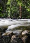 Oberflächenansicht von nassen Felsen und Wasser fließt in Leigh Creek, eingebettet zwischen den Kiefern am unteren Leigh Canyon, Big Horn National Forest; Wyoming, Usa — Stockfoto
