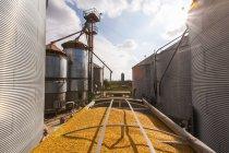 Grano camion caricato con mais a essiccatoio per cereali e bin complesso durante il raccolto di mais, vicino Nerstrand; Minnesota, Stati Uniti d'America — Foto stock