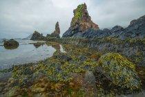 Maré baixa revela um mundo exuberante da vida debaixo d'água ao longo da costa de Strandir; Djupavik, West fiordes, Islândia — Fotografia de Stock