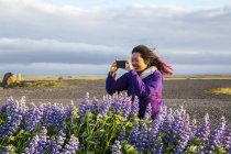 An asian female traveller taking picture of the lupine flowers on a windy day, Iceland — Stock Photo