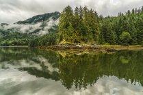 Paysage humide de brouillard au-dessus de la forêt pluviale du Grand Ours ; Hartley Bay, Colombie-Britannique, Canada — Photo de stock