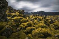 Campo de lava cobertas de musgo na Península de Snaefellsness; Islândia — Fotografia de Stock