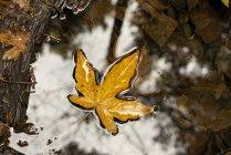 Желтый лист, плавающий на воде осенью; Калифорния, Соединенные Штаты Америки — стоковое фото