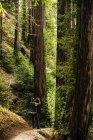 Mann steht im Wald und fotografiert die hohen Bäume — Stockfoto