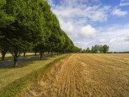 Straße mit üppigen Bäumen entlang eines Feldes mit einer Schnitternte gesäumt, buttevant, Grafschaft Kork, Irland — Stockfoto