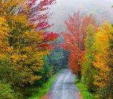 Vibrante autunno colorato fogliame in una foresta di alberi a foglie caduche — Foto stock