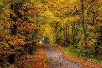 Lebendiges herbstliches Laub in einem Wald aus Laubbäumen — Stockfoto