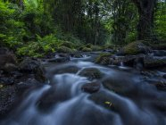 Ruisseau traversant la végétation luxuriante dans une forêt tropicale à Hawaï ; Oahu, Hawaï, États-Unis d'Amérique — Photo de stock