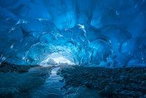 Голубой ледник обнажен в ледяной пещере на краю ледника Менденхолл, озеро Менденхолл, Национальный лес Тонгасс; Аляска, США — стоковое фото