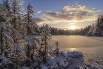 First snowfall in Tongass National Forest; Juneau, Alaska, United States of America — Stock Photo