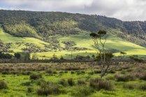 Lussureggianti campi verdi e foreste in primavera vicino alla città di Owaka; South Island — Foto stock