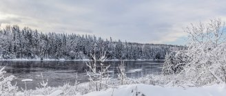 Snow-covered trees along Kam river in winter; Thunder Bay, Ontario, Canada — Stock Photo