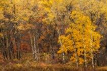 Autumn colours along the banks of the Little Sackville River; Lower Sackville, Nova Scotia, Canada — Stock Photo