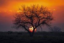 Coucher de soleil spectaculaire avec le soleil derrière un arbre silhouetté et le ciel rouge et jaune brillant, Denver, Colorado, États-Unis d'Amérique — Photo de stock