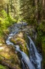Vue panoramique sur la majestueuse forêt de Sol Duc Falls, High Divide Trail, parc national olympique ; Washington, États-Unis d'Amérique — Photo de stock