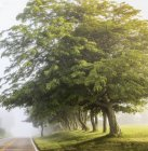 Early morning fog road with trees — Stock Photo