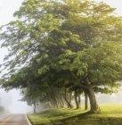Brouillard matinal avec arbres — Photo de stock