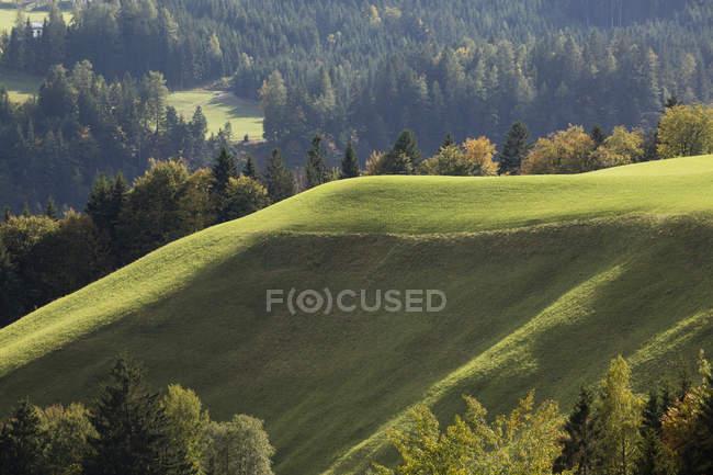 Baignées de soleil colline verdoyante avec des arbres — Photo de stock