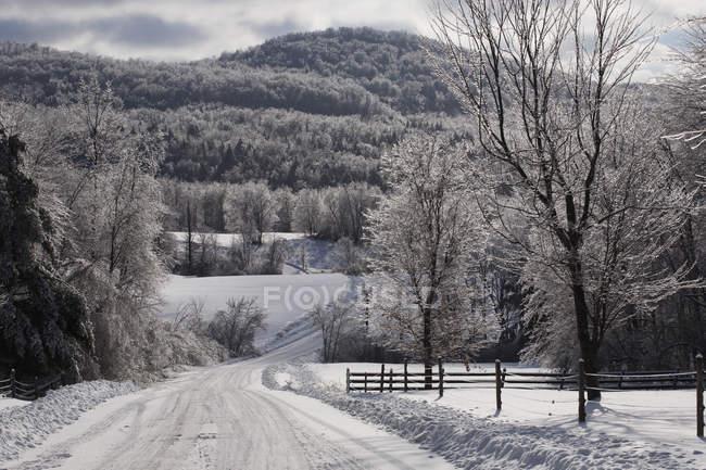 Дорога зимой после ледяного шторма — стоковое фото
