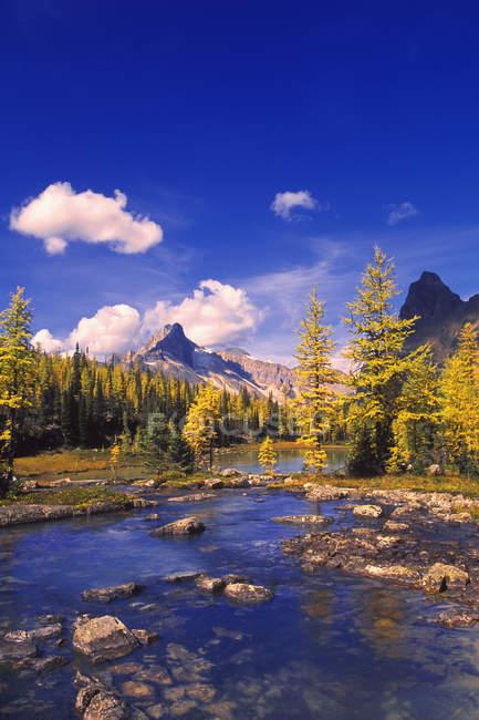 Scenic Creek avec de l'eau — Photo de stock